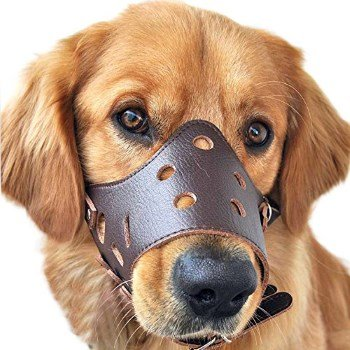 Pawliss Adjustable Leather Muzzle