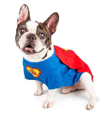 Superhero Dog Halloween Costumes