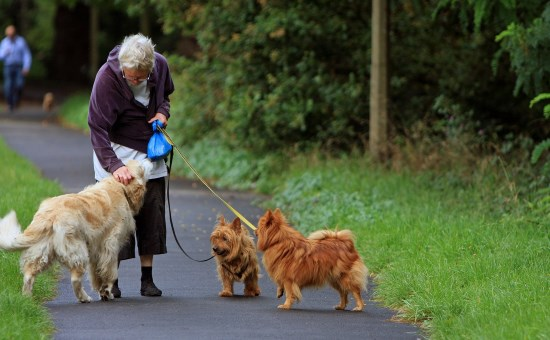 how to hire a dog walker