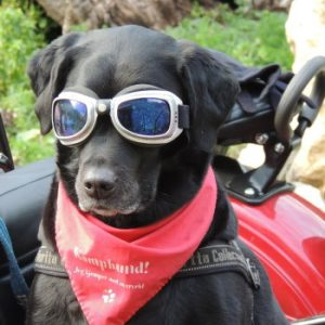 motorcycle accessories for dogs