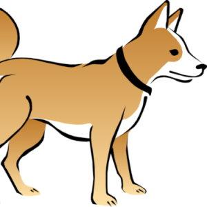 dog with collar