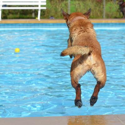 Can Dogs Swim in Chlorine Pool