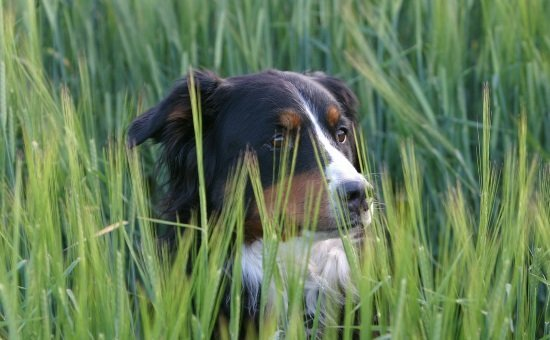 dog outdoor safety tips