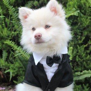 dog in wedding tux