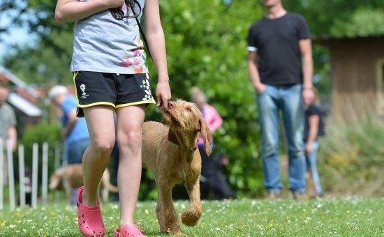 choose a dog trainer