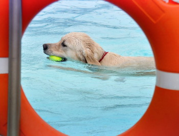 swimming pool accessories for dogs