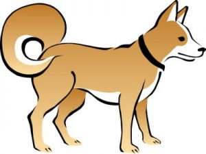 choose the perfect dog collar