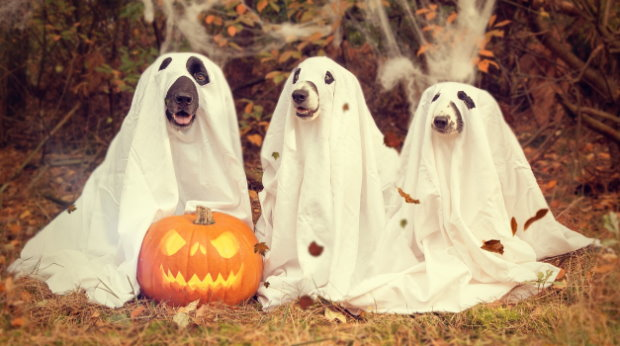 Halloween Dog Costumes for Big Dogs