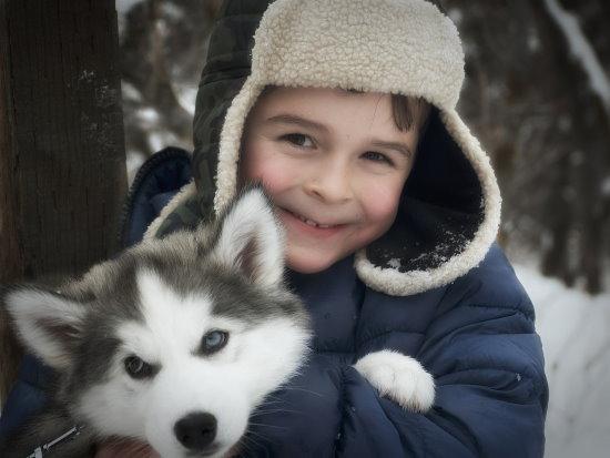 Siberian Husky with kid
