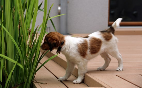 tips on choosing a dog trainer