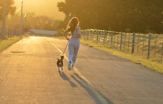 running accessories for dogs